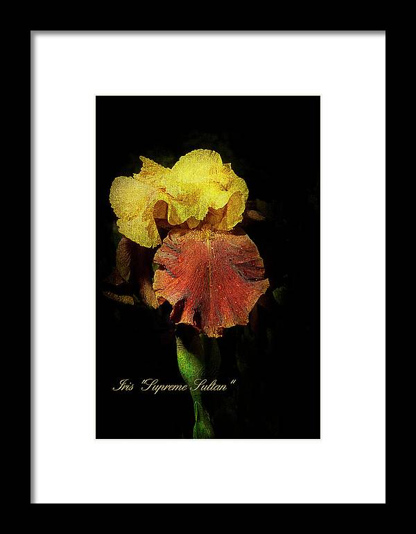Agriculture Framed Print featuring the photograph Supreme Sultan Iris by John Trax