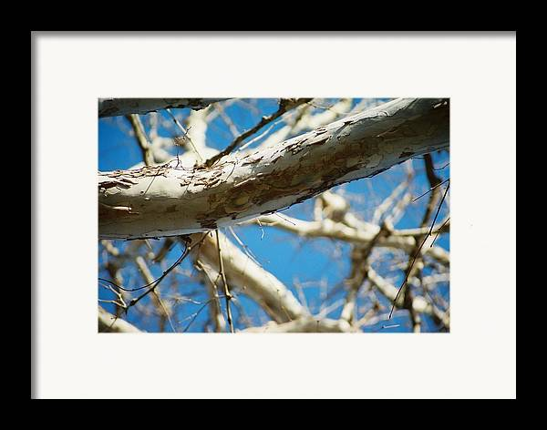 Tree Framed Print featuring the photograph Surreal Telephoto by Jennifer Trone
