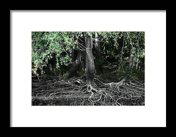 Debra Forand Framed Print featuring the photograph Survival Of The Fittest by Debra Forand