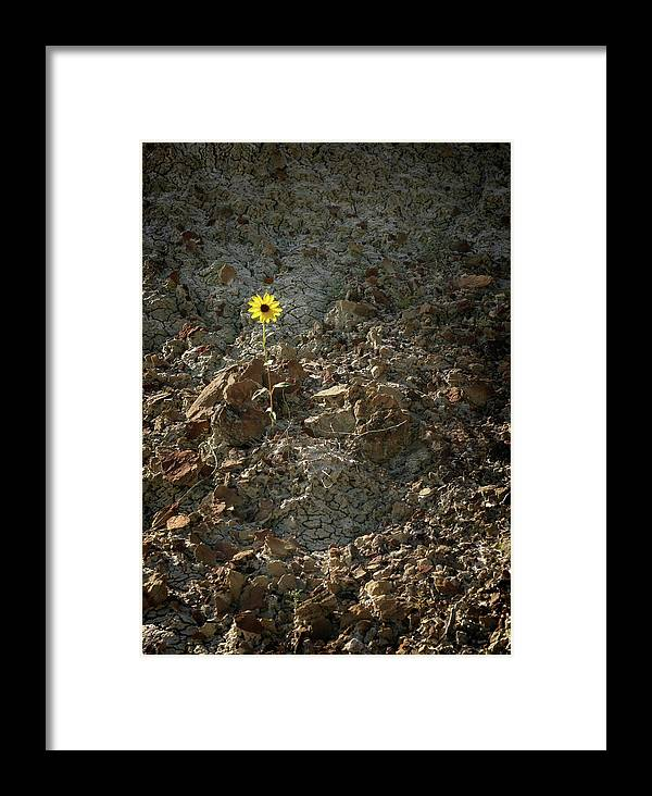 Daisy Framed Print featuring the photograph Survivor - 365-327 by Inge Riis McDonald