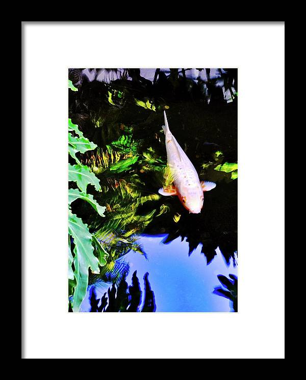 Koi Framed Print featuring the photograph Suspended Ghost Koi  by Kirsten Giving