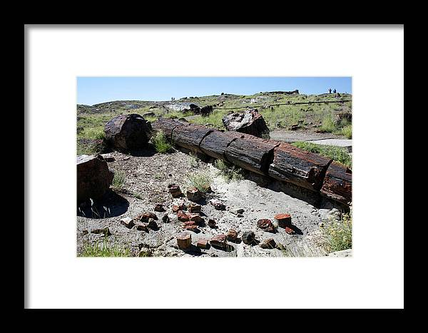 Photo Framed Print featuring the photograph Sw10 Southwest by James D Waller