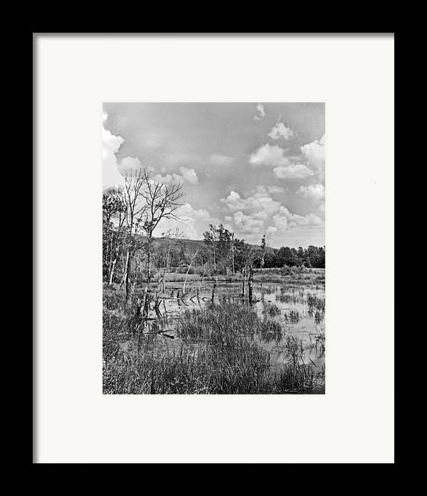 Ansel Adams Framed Print featuring the photograph Swamp by Curtis J Neeley Jr