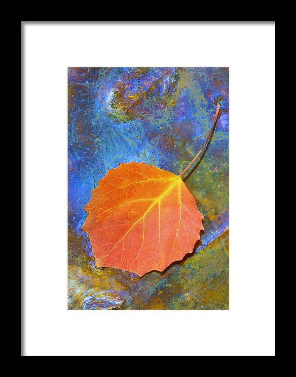 Leave Framed Print featuring the photograph Swampoil by Andreas Freund
