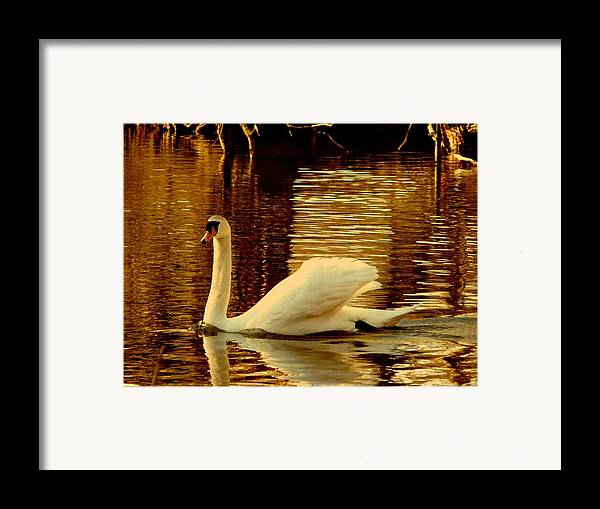 Swan Framed Print featuring the photograph Swan Dance by Kendall Eutemey