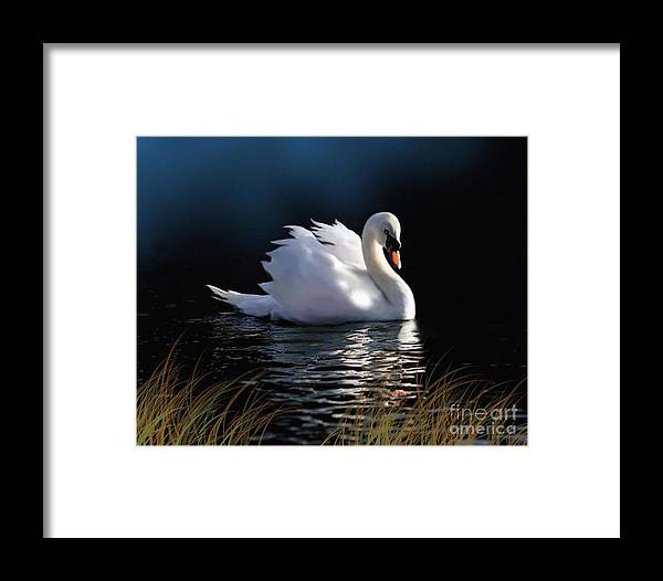 Swan Framed Print featuring the painting Swan Elegance by Robert Foster