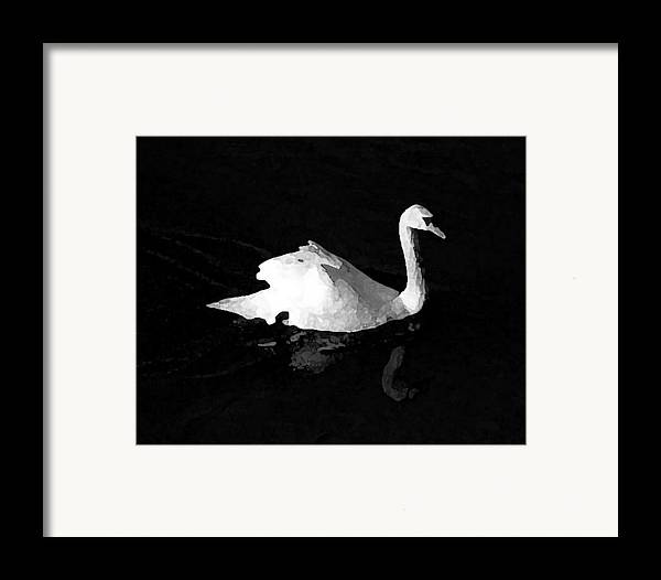 Swan Framed Print featuring the photograph Swan In Blackwater by John Bradburn