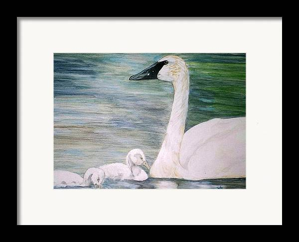 Swan Framed Print featuring the painting Swans by Debra Sandstrom