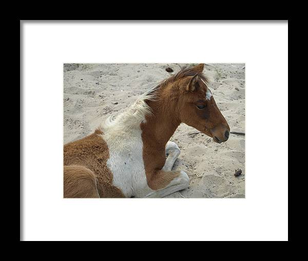Sand Framed Print featuring the photograph Sweet Moment by Kim