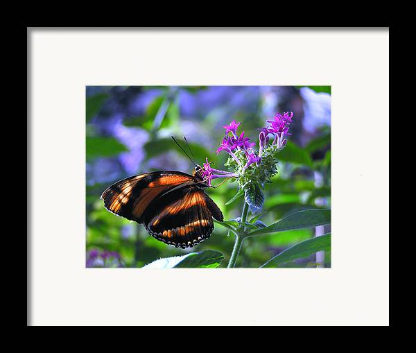 Butterfly Framed Print featuring the photograph Sweet Nector by Louise Magno