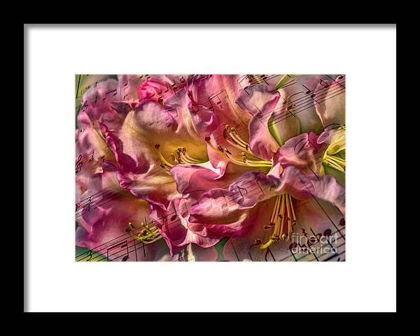 Music Framed Print featuring the photograph Sweet Notes by Jean OKeeffe Macro Abundance Art