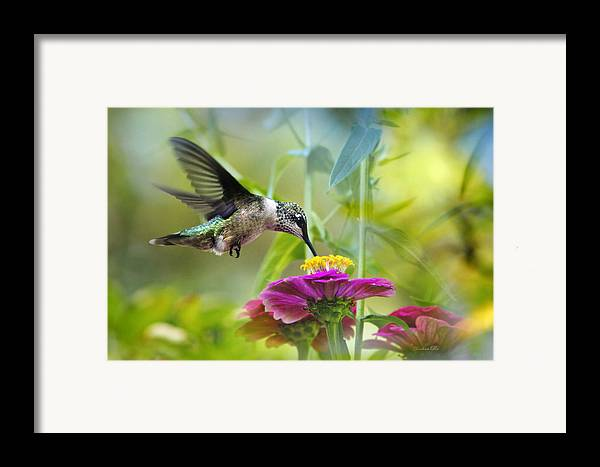 Bird Framed Print featuring the photograph Sweet Success by Christina Rollo