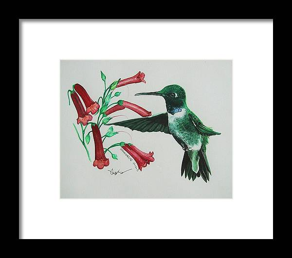 Hummingbird Framed Print featuring the painting Sweet Treat by Richard Ong