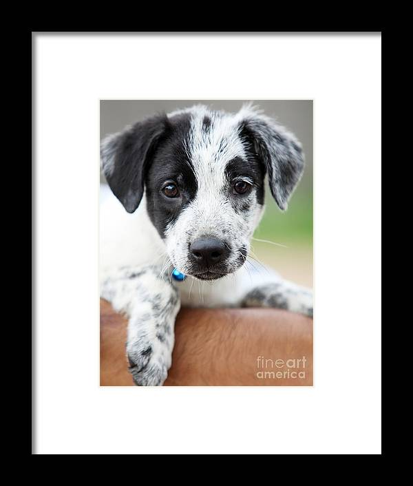 Puppy Framed Print featuring the photograph Sweetness by Amanda Barcon