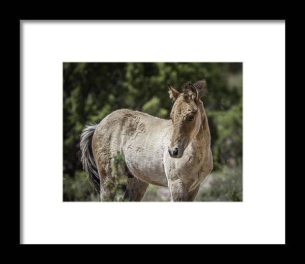 Foal Framed Print featuring the photograph Sweetness by Elizabeth Eldridge