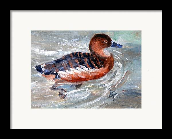 Duck Framed Print featuring the painting Swimming Aceo by Brenda Thour