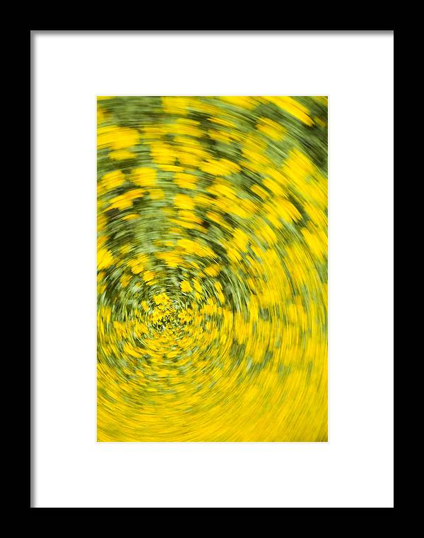 Flower Framed Print featuring the photograph Swirling Flowers by Bob Coates
