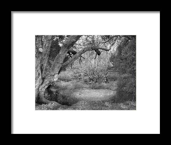Landscape Framed Print featuring the photograph Sycamore Grove Black And White by Karen W Meyer