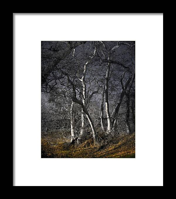 Landscape Framed Print featuring the photograph Sycamore Grove by Karen W Meyer
