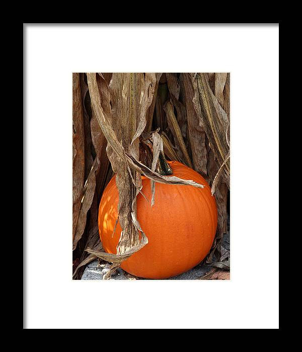 Pumpkin Framed Print featuring the photograph Symbols Of Fall by Linda A Waterhouse