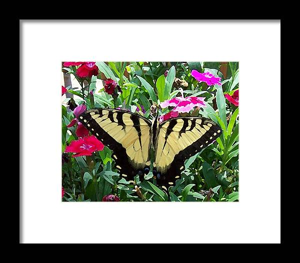 Swallowtail Framed Print featuring the photograph Symmetry by Sandi OReilly