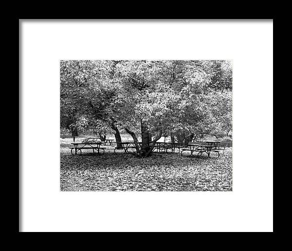 Cslanec Framed Print featuring the photograph Tables And Tree by Christian Slanec