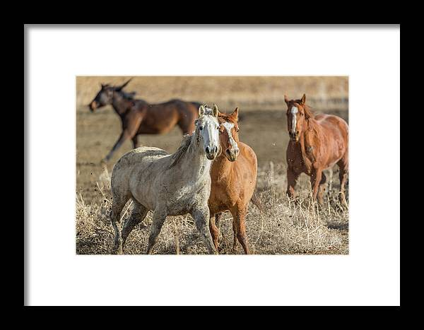 Horse Framed Print featuring the photograph Tag, You're It by David F Hunter