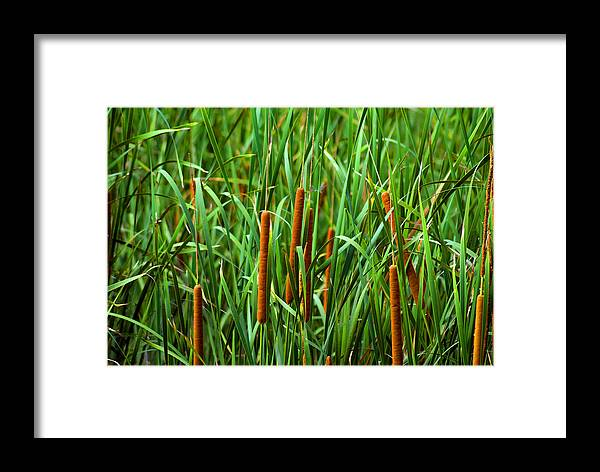 Cattails Framed Print featuring the photograph Tails by Anthony Knapp