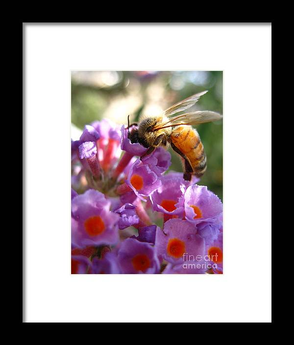 Michelle Darensbourg Framed Print featuring the photograph Take A Look by Michelle Darensbourg