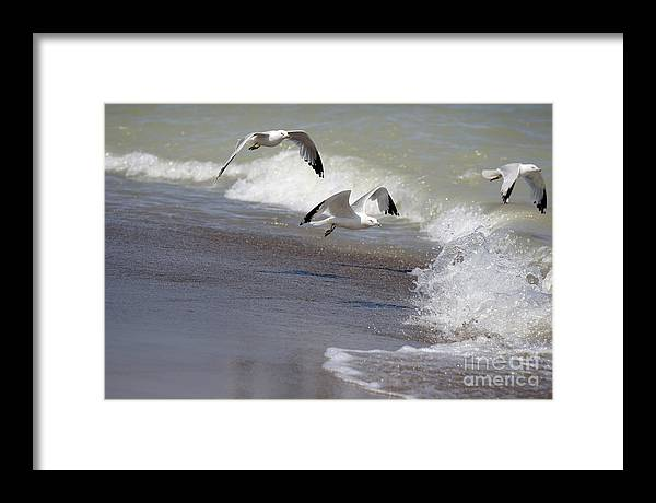 Seagull Framed Print featuring the photograph Take Flight by Jeannie Burleson