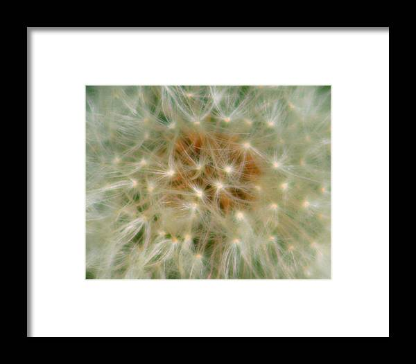 Flower Framed Print featuring the photograph Take Your Best Guess by David Dunham