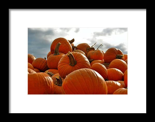 Pumpkins Framed Print featuring the photograph Take Your Pick by Laura DAddona