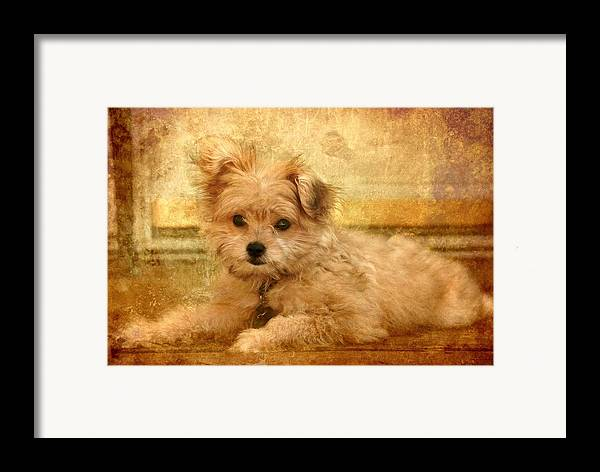 Mi-ki Framed Print featuring the photograph Taking A Break by Angie Tirado
