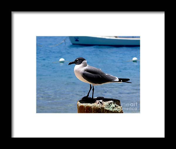 Seagull Framed Print featuring the photograph Taking A Break by PJ Cloud