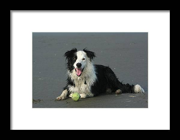 Dog Framed Print featuring the photograph Taking Five by JoJo Photography