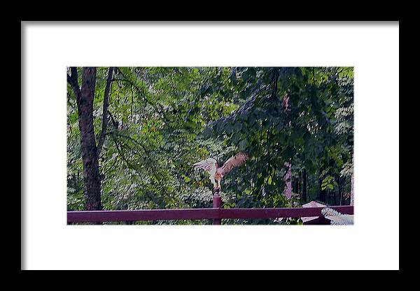 Hawk Framed Print featuring the photograph Taking Off by Joe D Dry