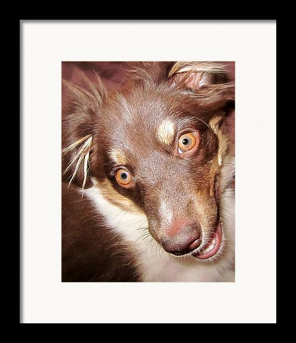 Talking Dog Framed Print featuring the photograph Talking Dog by Gwyn Newcombe