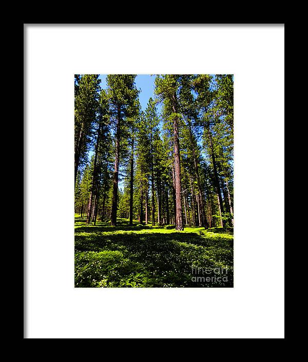 California Framed Print featuring the photograph Tall Forest by Grant Bolei