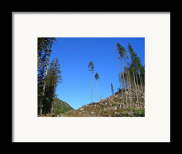 British Columbia Framed Print featuring the photograph Tall Timbers by Jim Thomson