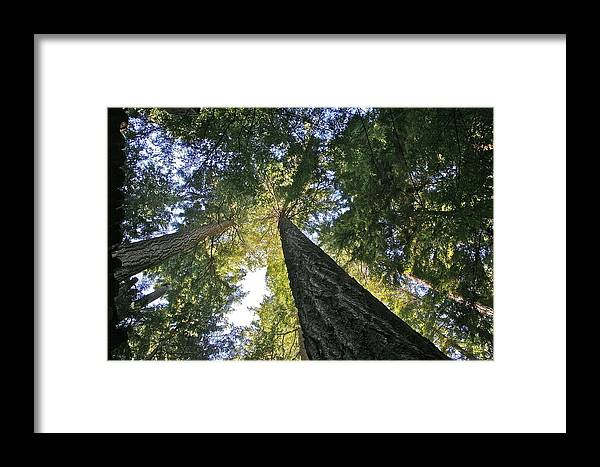 Trees Framed Print featuring the photograph Tall Trees by Robert Joseph