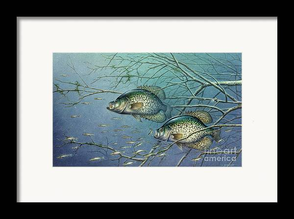 Jon Q Wright Framed Print featuring the painting Tangled Cover Crappie II by Jon Q Wright