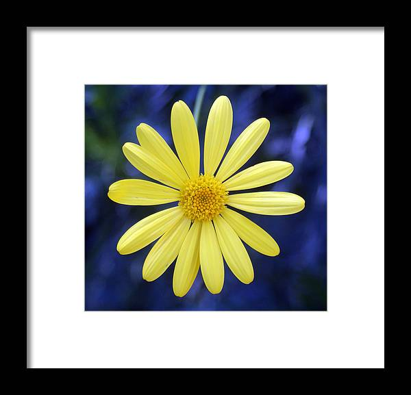 Flower Framed Print featuring the photograph Tangled Up In Blue by Kat Dee