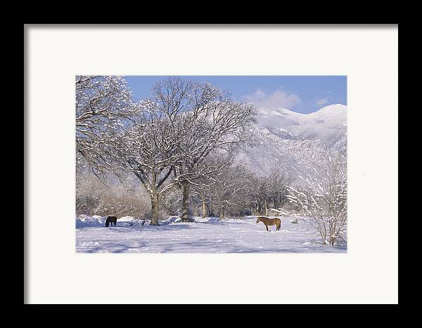 Landscape Framed Print featuring the print Taos January 2008 by Lynard Stroud