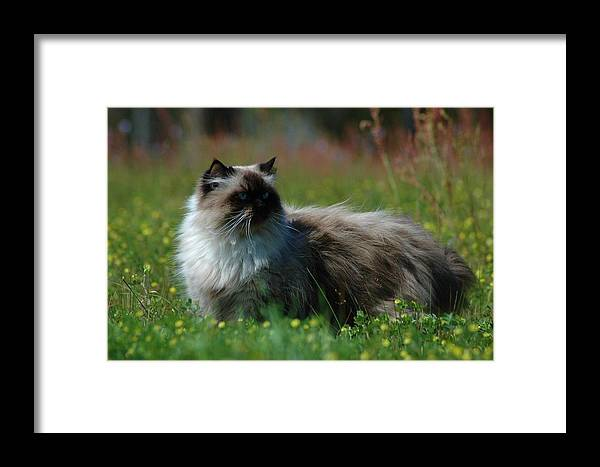 Animals Framed Print featuring the photograph Taste Of Freedom by Lori Mellen-Pagliaro