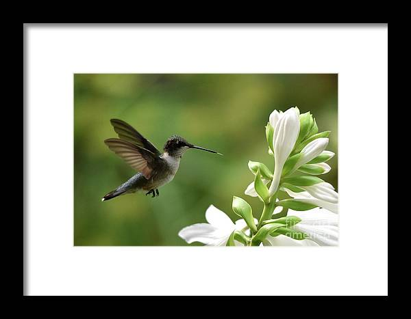 Bird Framed Print featuring the photograph Tasty by Charles Trinkle
