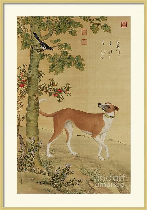 Tawney Yellow Chinese Greyhound by Giuseppe Castiglione