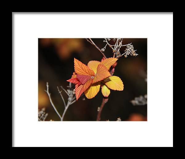 Landscape Framed Print featuring the photograph Tear by Sergey and Svetlana Nassyrov