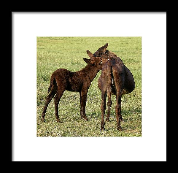 Animals Framed Print featuring the photograph Tell Me A Secret by Jan Amiss Photography