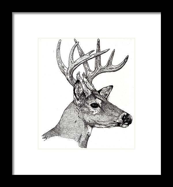 Deer Framed Print featuring the drawing Ten Point Buck by Debra Sandstrom