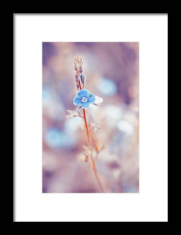 Beautiful Framed Print featuring the photograph Tender Forget-me-not Flower by Oksana Ariskina